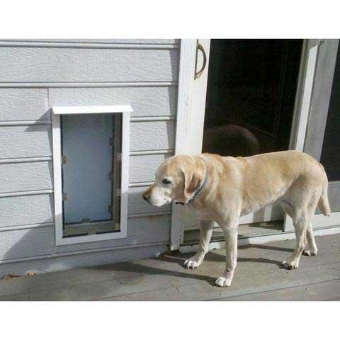 Pet Doors Phoenix Windows And Doors Phoenix Pet Doors